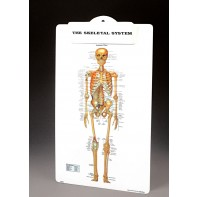 skeletal clipboard
